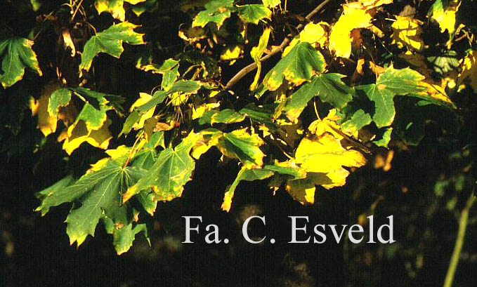 Plantentuin Esveld