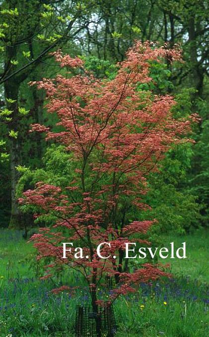 Esveld Pictures