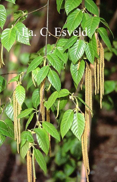 植物根和茎初生结构示意图