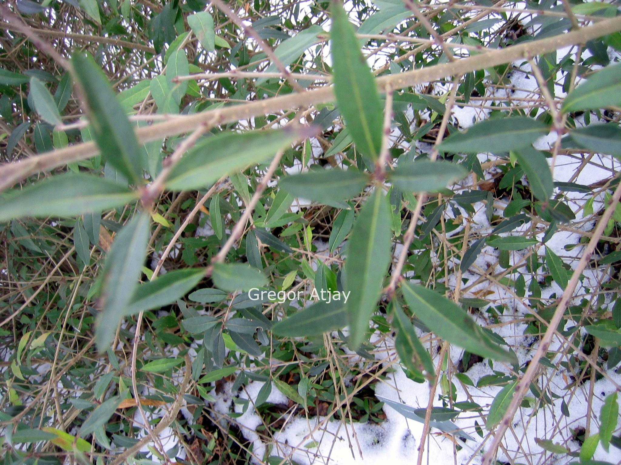 Haagplanten bosplanten jonge planten met blote wortel