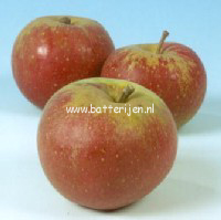 Malus domestica 'Karmijn de Sonnaville'