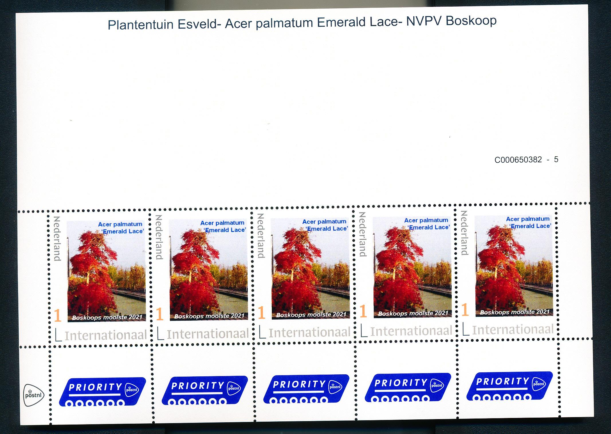 Postzegel Intern. Acer p. Emerald Lace