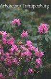 Rhododendron sichotense